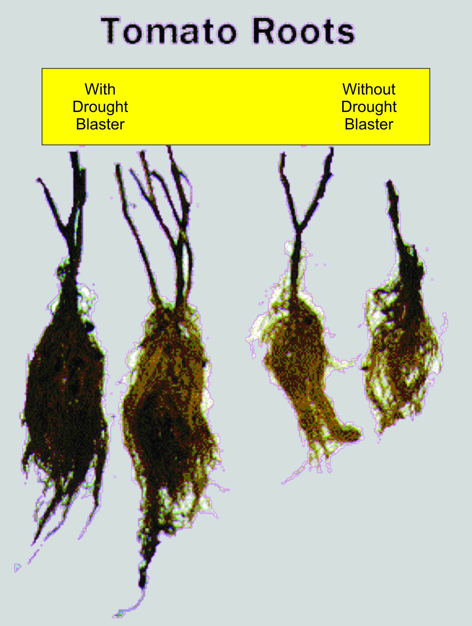Dought Blaster Improves Plant & Root Quality